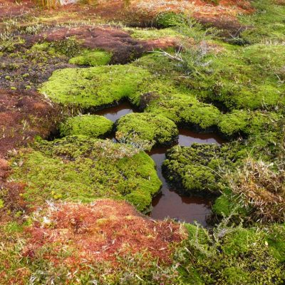 Mixed plants along a small channell over a flow-through bog in Lago Quetru-Aysén